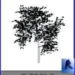 Familias para Revit | Plantas| 001 Planta modelo 01